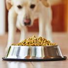 Karma sucha dla psa